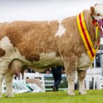 Supreme Beef Champion Great Yorkshire Show 2017