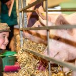 Pigs on display at Countryside Live