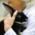 Rabbit Steward Sheila Carnforth with one of the rabbit entrants