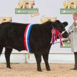 Supreme Beef Champion 2017