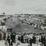 1954 Cattle parade at the Great Yorkshire Show