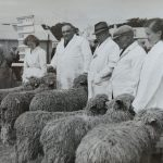 1954 Sheep exhibitors at the Great Yorkshire Show
