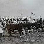 Cattle exhibitors at the Great Yrkshire Show 1954