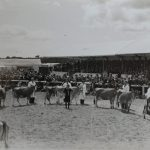 Dairy exhibitors at the Great Yorkshire Show 1954