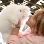 Best rabbit at Countryside Live 2019