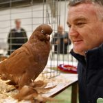 Pigeon Champion at Countryside Live 2019