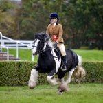 Ridden Coloured Horse & Pony Championship Winner 2019