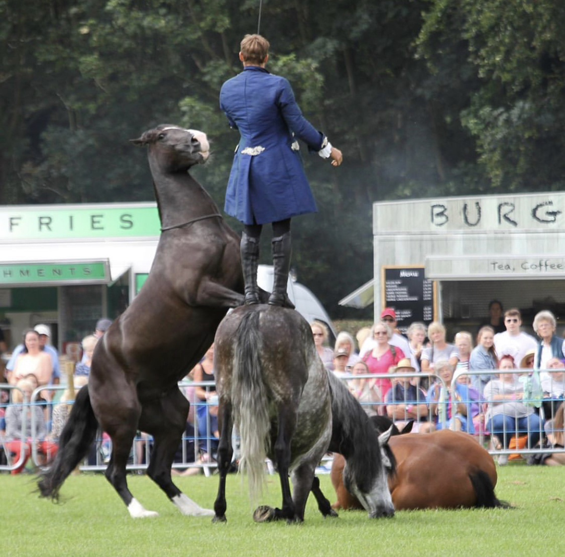 atkinson action horses to star at Great Yorkshire Show 2020