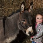 Dominic the miniature donkey due to feature at Springtime Live 2020