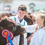 Cattle Parade GYS